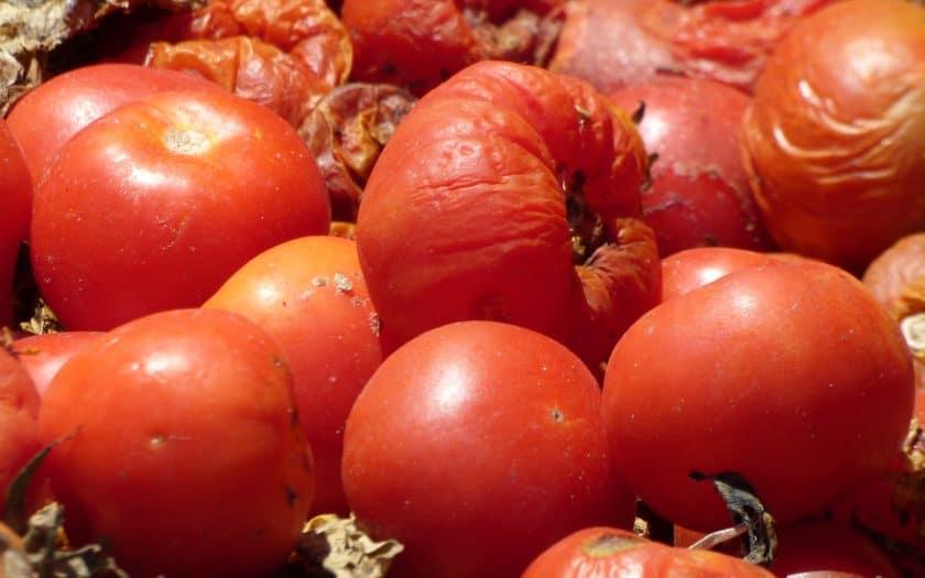 Nachhaltigkeit vs. Nahrungsmittelverschwendung