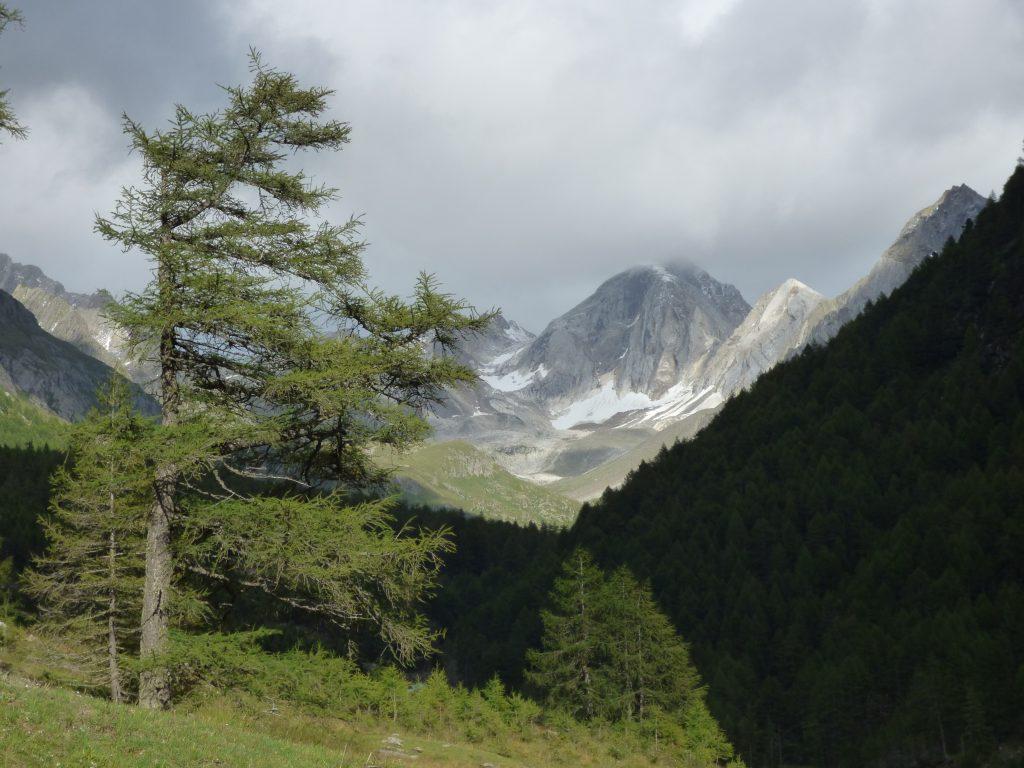 Lärchen, Almen und Felsen im Pfossental