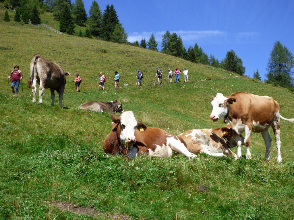 Eine Kuh macht Muh, viele Kühe machen Mühe ...