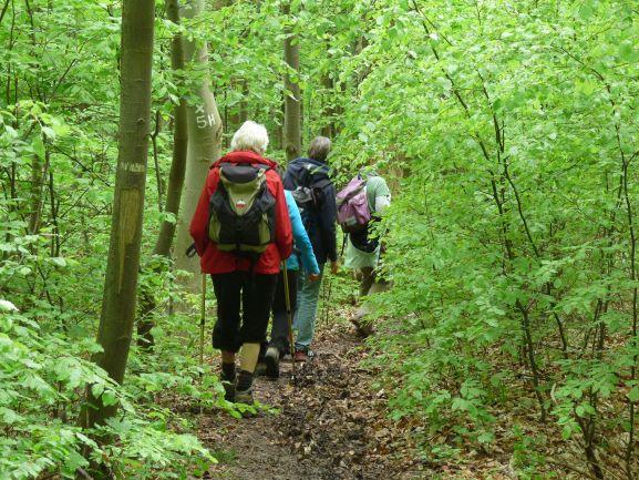 Wandern im Buchenwald des Hainich