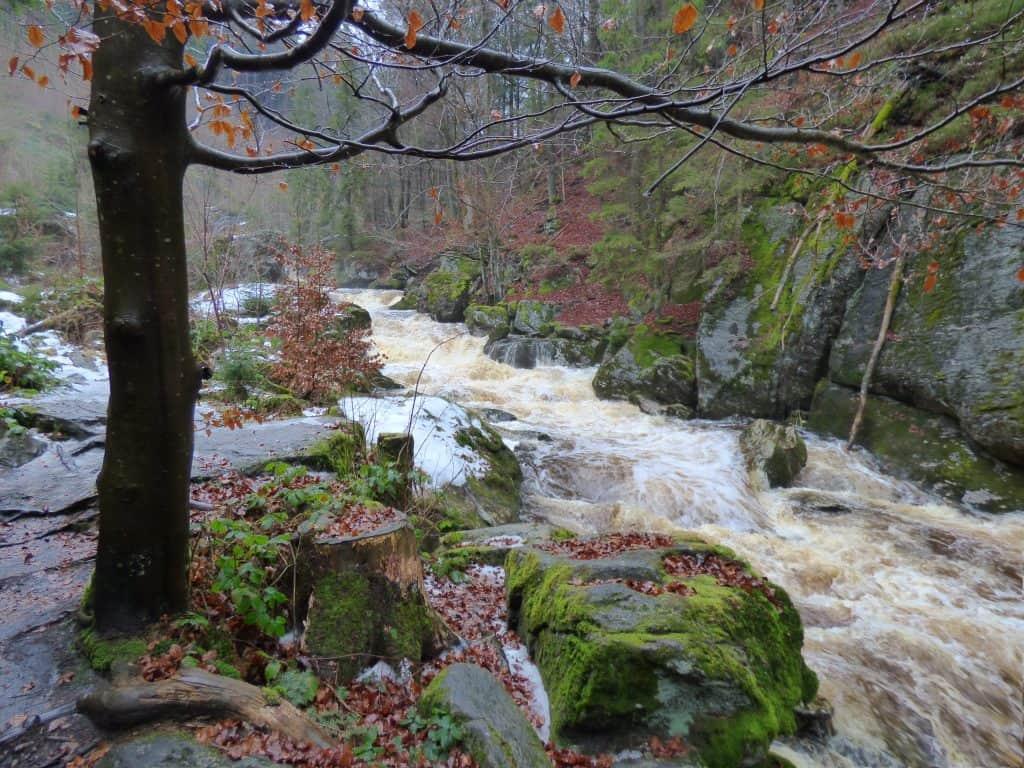 Wasser und Wald im Bayerischen Wald