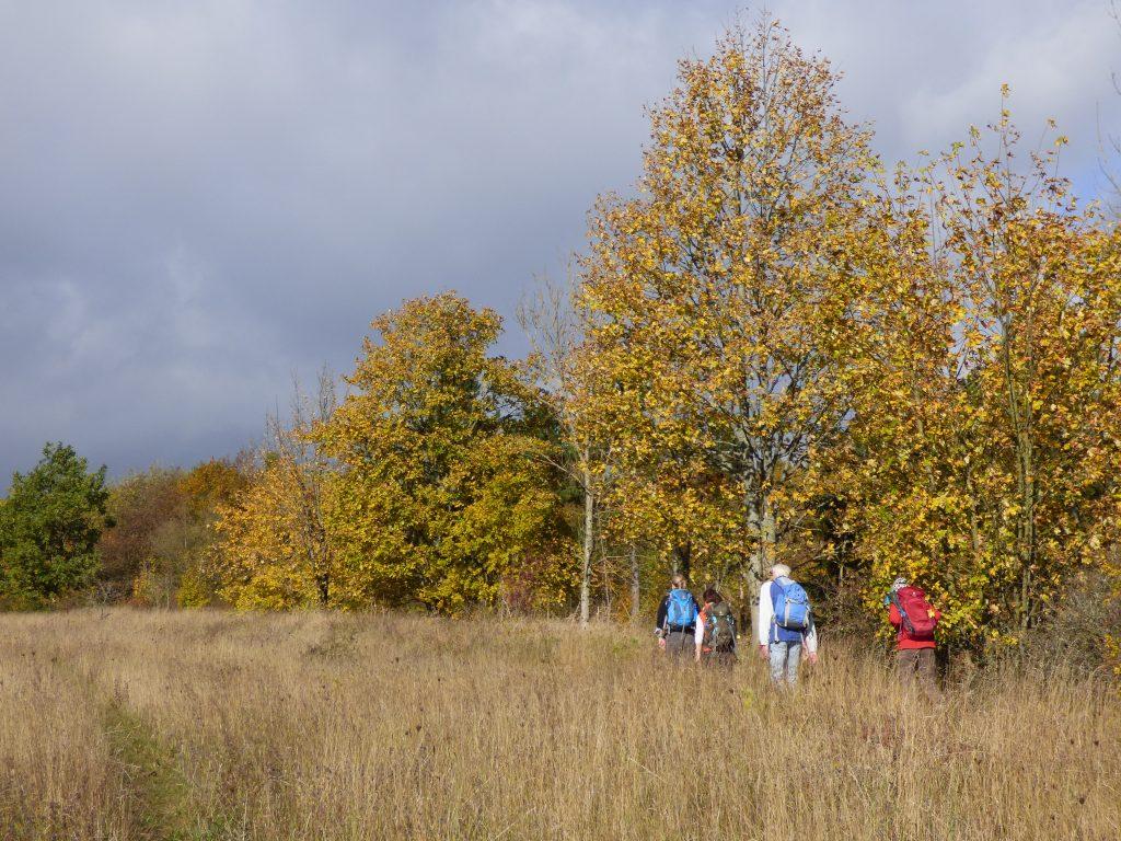 Wandern im Herbst