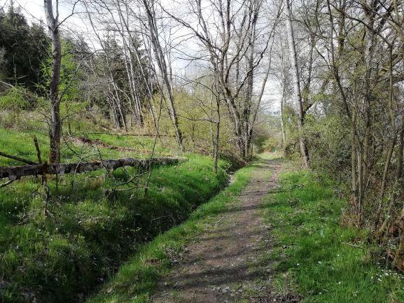 Vor Veckerhagen öffnet sich die Landschaft.