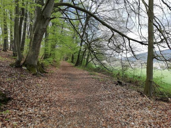 Abwechslungsreiche Mischwälder begleiten den Weserberglandweg.