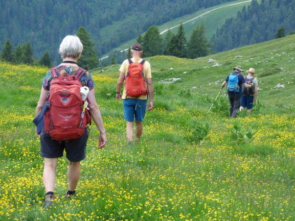 Bergwandern durch Almwiesen