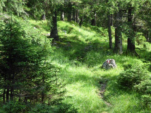 Aufstieg auf Waldpfaden bei Seefeld